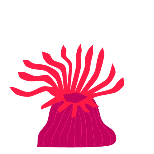 イソギンチャクの画像 p1_18