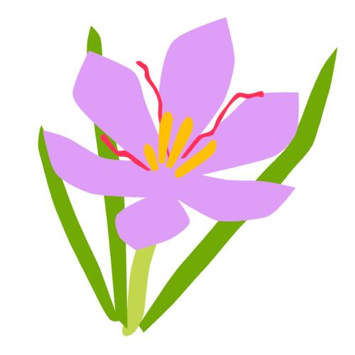 サフランの花の無料イラスト サフランの花の無料イラスト(オーフリー写真素材) トップ | 利用規